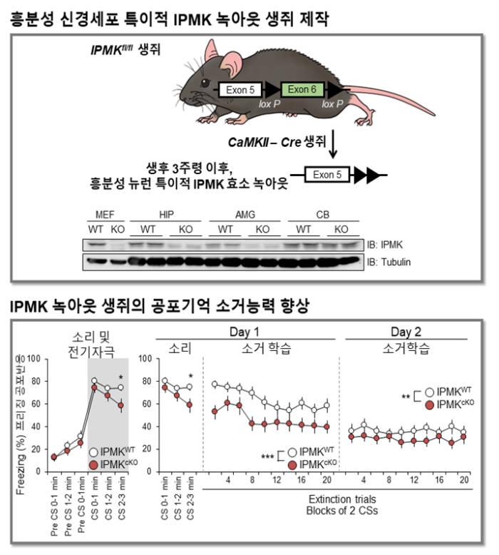 김세윤 기사1.jpg