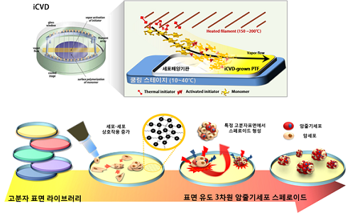 암줄기세포2.png